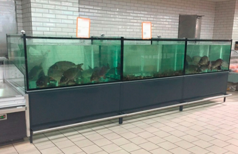 Торговый аквариум