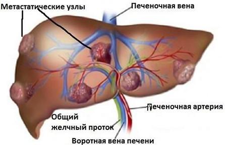 http://dl3.joxi.net/drive/2021/08/07/0048/3236/3157156/56/6b4bc60906.jpg